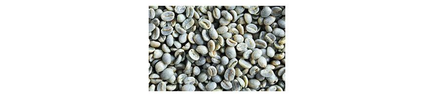 Café Vert - non torréfié