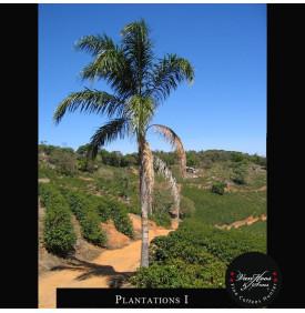 BSCA Fazenda Passeio 100% Catuai Pulped Natural - Brésil Van Hoos & Sons® 3 7.6 La Fazenda Passeio est située dans une zone priv