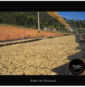 BSCA Fazenda Passeio 100% Catuai Pulped Natural - Brésil Van Hoos & Sons® 5 7.6 La Fazenda Passeio est située dans une zone priv