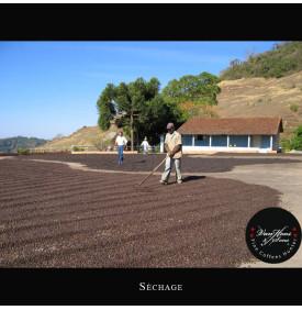 BSCA Fazenda Passeio 100% Catuai Pulped Natural - Brésil Van Hoos & Sons® 6 7.6 La Fazenda Passeio est située dans une zone priv