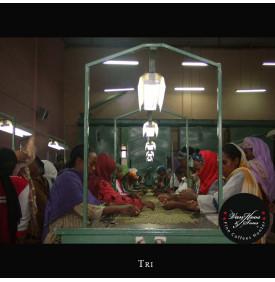 Moka Harrar Bashaweh - Ethiopie Van Hoos & Sons® 5 8.5 La région Harrar Centrale Est de l'Éthiopie, produit un café qui avec la