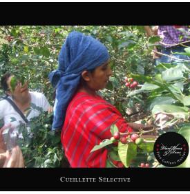 Finca Santa Clara 250 gr Van Hoos & Sons® 4 11.499996 Région Antigua : Le café Finca Santa Clara a obtenu la 3ème place lors la