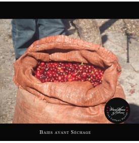 Finca Santa Clara 250 gr Van Hoos & Sons® 6 11.499996 Région Antigua : Le café Finca Santa Clara a obtenu la 3ème place lors la